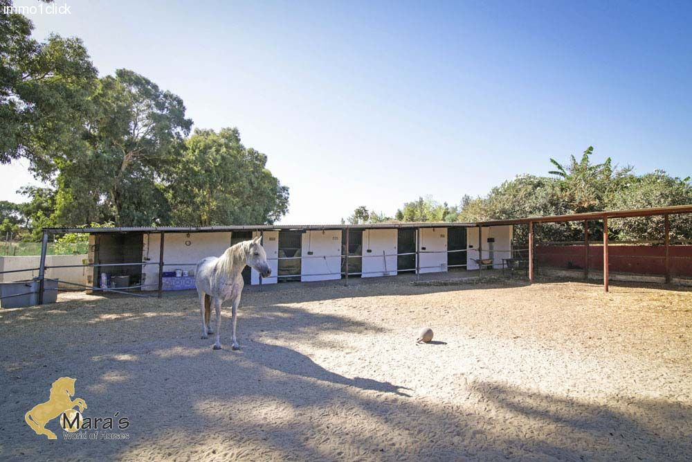 house with pool, horseboxes, Andalusia, Sevilla, near Coto Donana for sale